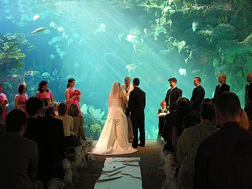 прикольная свадьба возле аквариума
