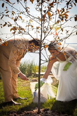 где сажать дерево на свадьбе