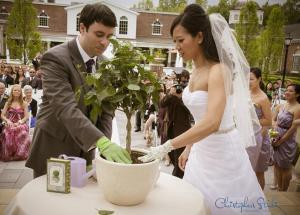 посадить дерево на свадьбе