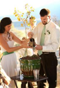 традиция сажать дерево на свадьбе